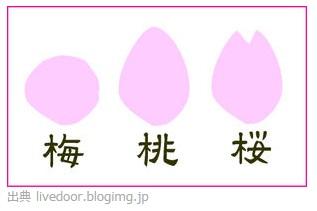 梅桃桜.jpg