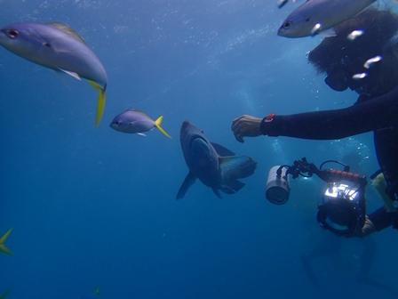 海 魚.JPG